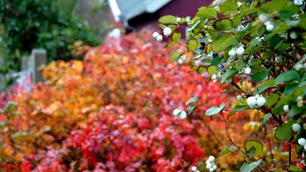 Efterårsskitse